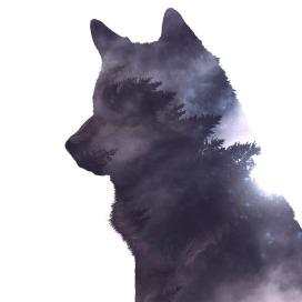 wolf-2741085_960_720